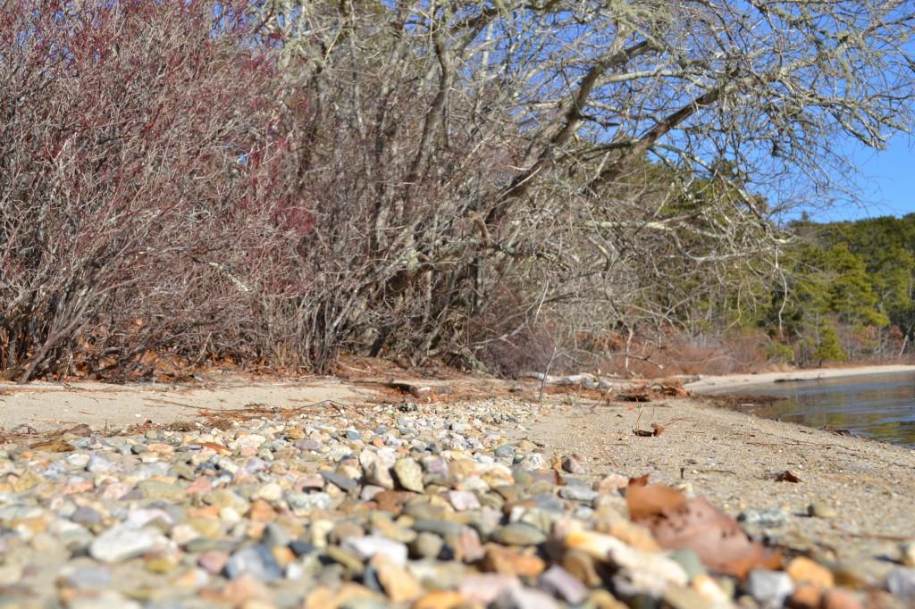 Pond side, Cliff pond December 31, 2010