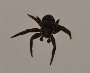 crabspider April  25 2011