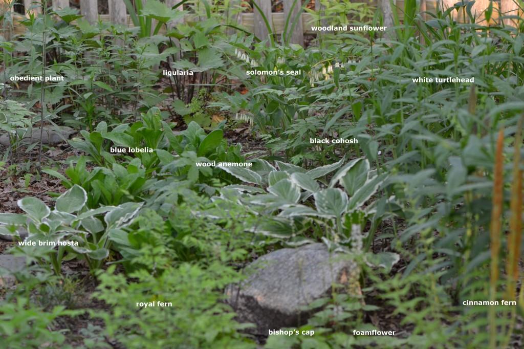 front yard May 22 2011